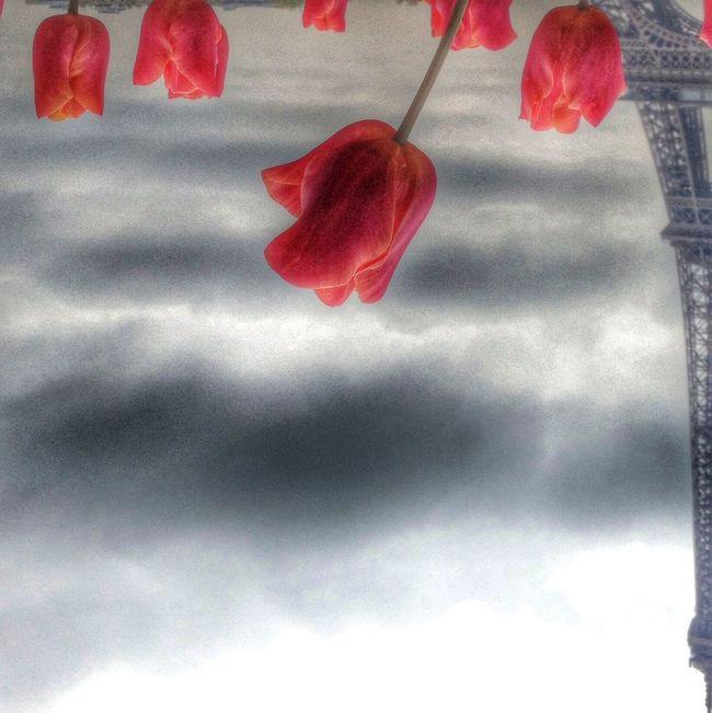 Je n'ai fait que l'édit ... L'image partielle est de @jcg48 (Instagram) Paris Rsa_nature Tribegram
