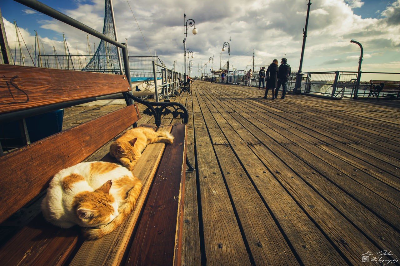 Animal Themes Cat Cats Clouds And Sky Domestic Animals Outdoors Pets Relaxation Relaxing