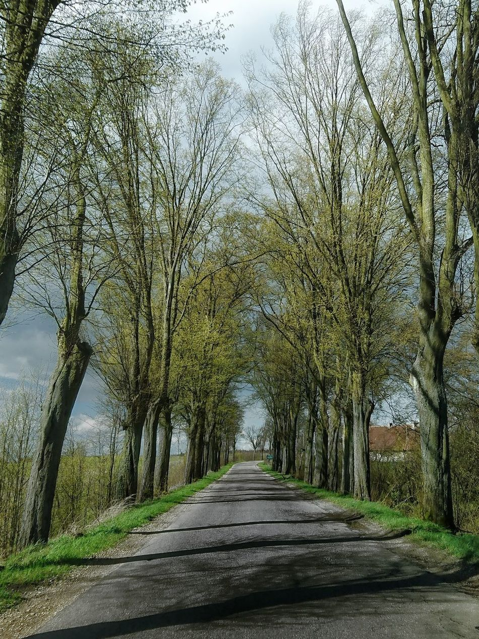 Tree Nature Beauty In Nature Day Outdoors No People Road Sky Scenics Poland Warmia