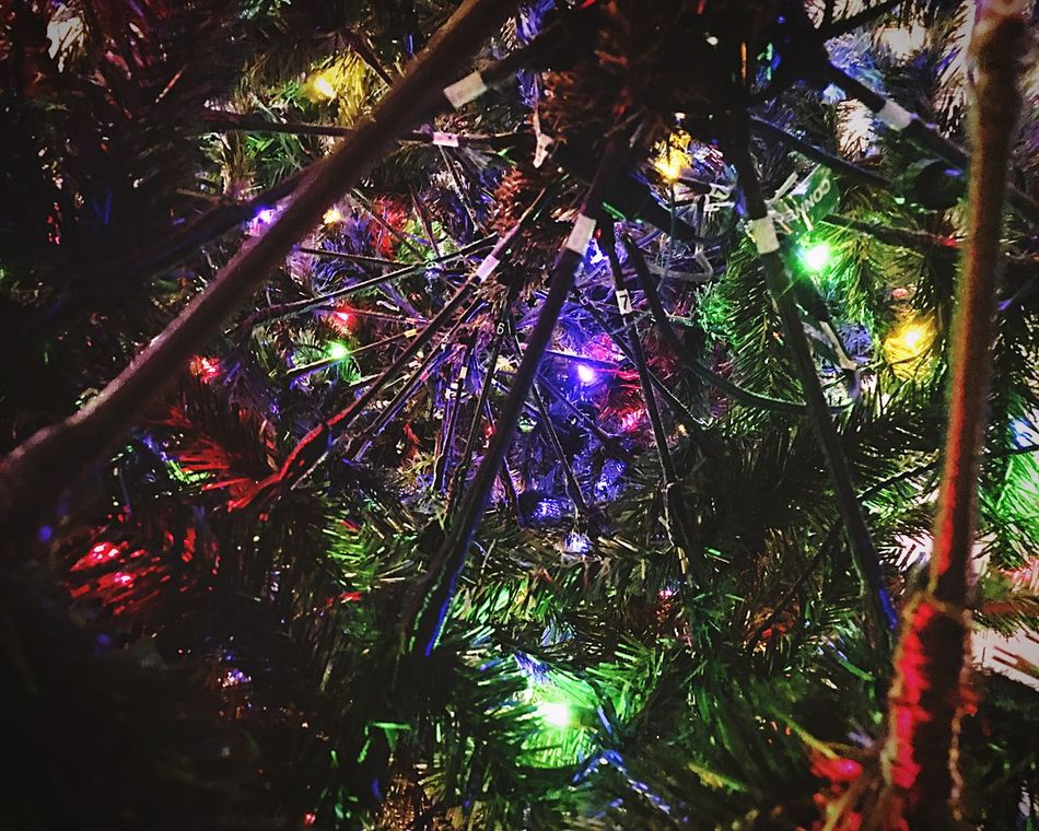 Tree No People Hanging Christmas Tree Christmas Christmas Decoration Christmas Lights Celebration Illuminated Night Close-up Branch Christmas Ornament Outdoors Nature
