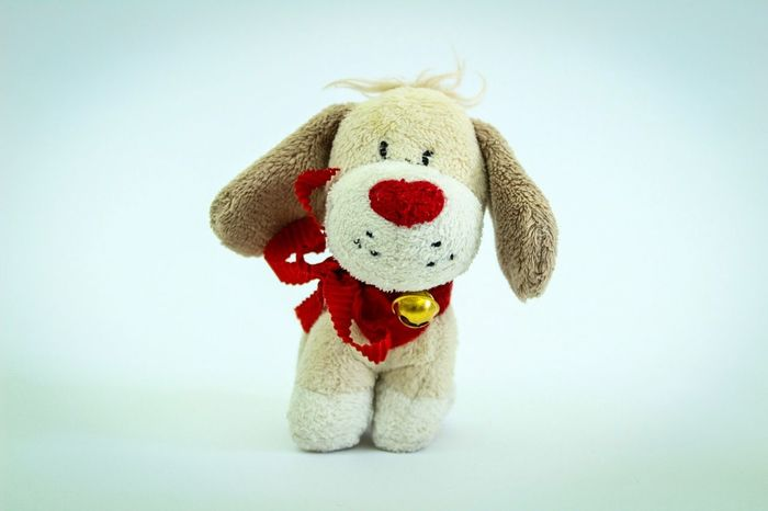 Teddy Bear Stuffed Toy Toy Animal Representation Toy Animal No People Hanging Childhood Close-up Indoors  White Background Day Softtoy Gift Valentine's Day  Love Frommetoyou Dog