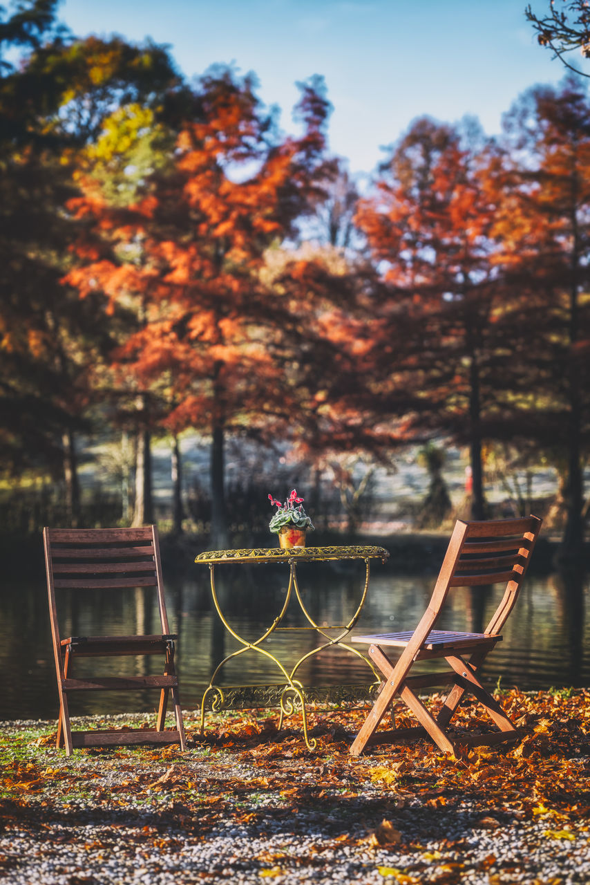 tree, orange color, beauty in nature, nature, outdoors, tranquility, autumn, growth, no people, tranquil scene, lake, water, scenics, day, sunset, sky, branch, leaf