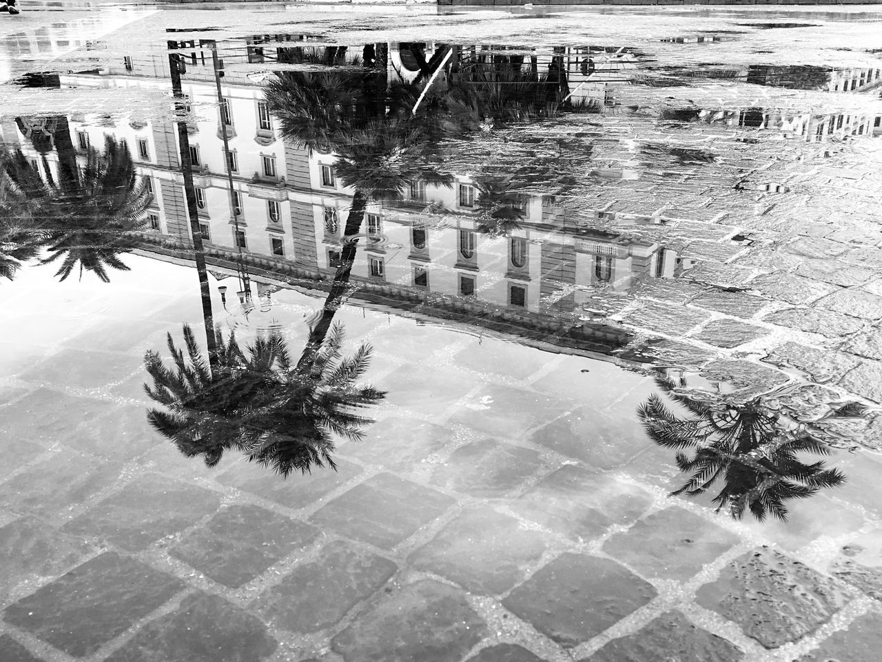 When in Rome 003 Reflection Palm Tree Rome Shootermag AMPt - Street Italy VSCO Blackandwhite Vscocam Black & White Photography Black And White