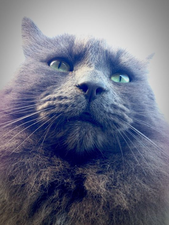 Outdoors Domestic Cat Pets One Animal Animal Themes Domestic Animals Feline Whisker Animal Hair Portrait Close-up Animal Head  Day No People