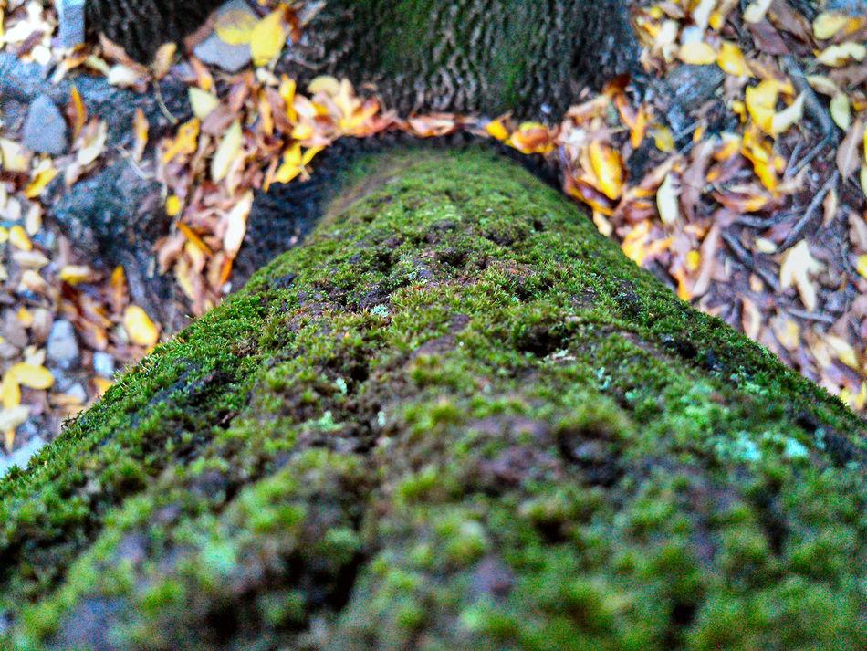 April Came Wet Autumn Humidity Beauty In Nature Buenos Aires Close-up Green Color Lo Que Mata Es La Humedad Natural Pattern Nature Selective Focus