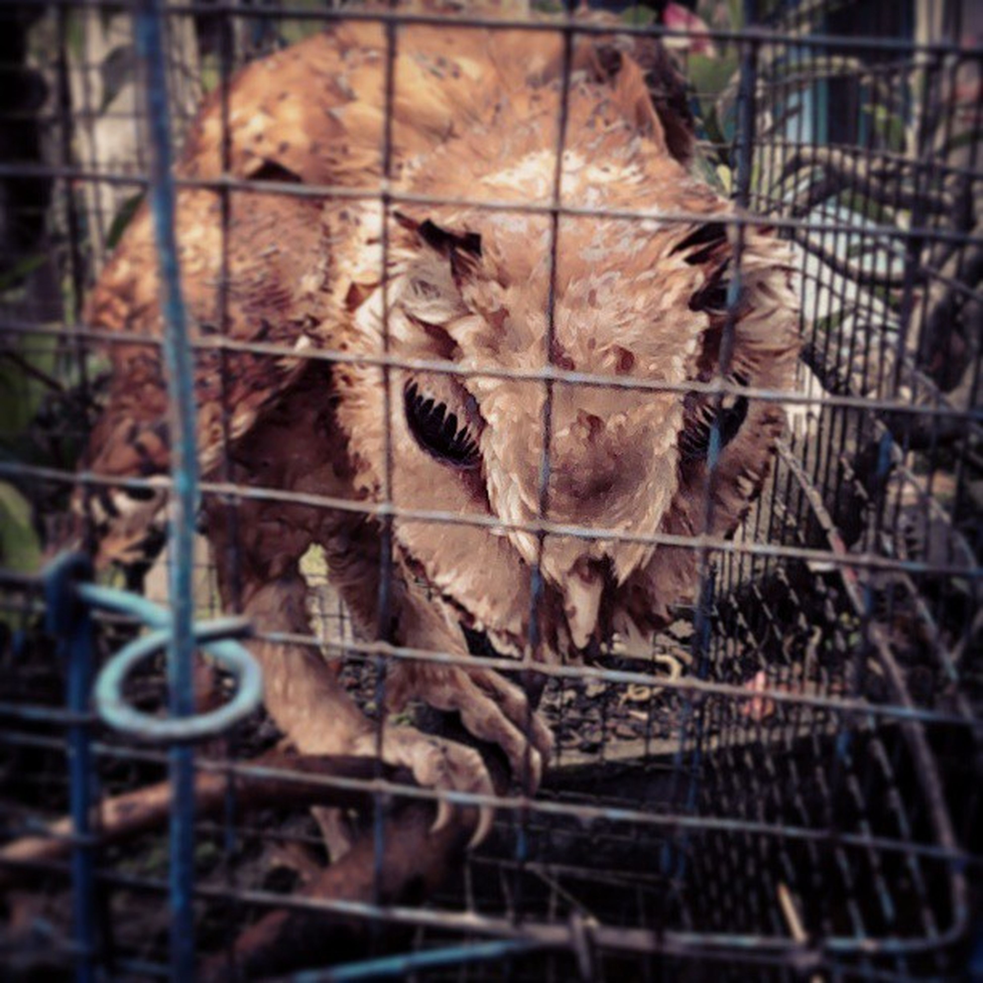 animal themes, one animal, wildlife, mammal, animals in the wild, cage, fence, metal, chainlink fence, animals in captivity, close-up, zoo, no people, domestic animals, outdoors, day, focus on foreground, damaged, abandoned, two animals