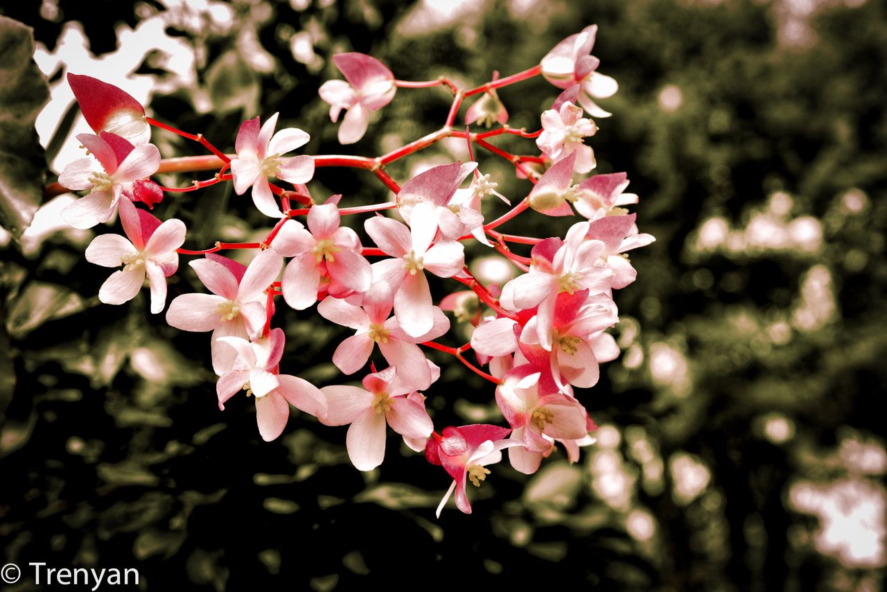flower, beauty in nature, growth, nature, fragility, petal, no people, freshness, plant, outdoors, day, blooming, tree, close-up, flower head