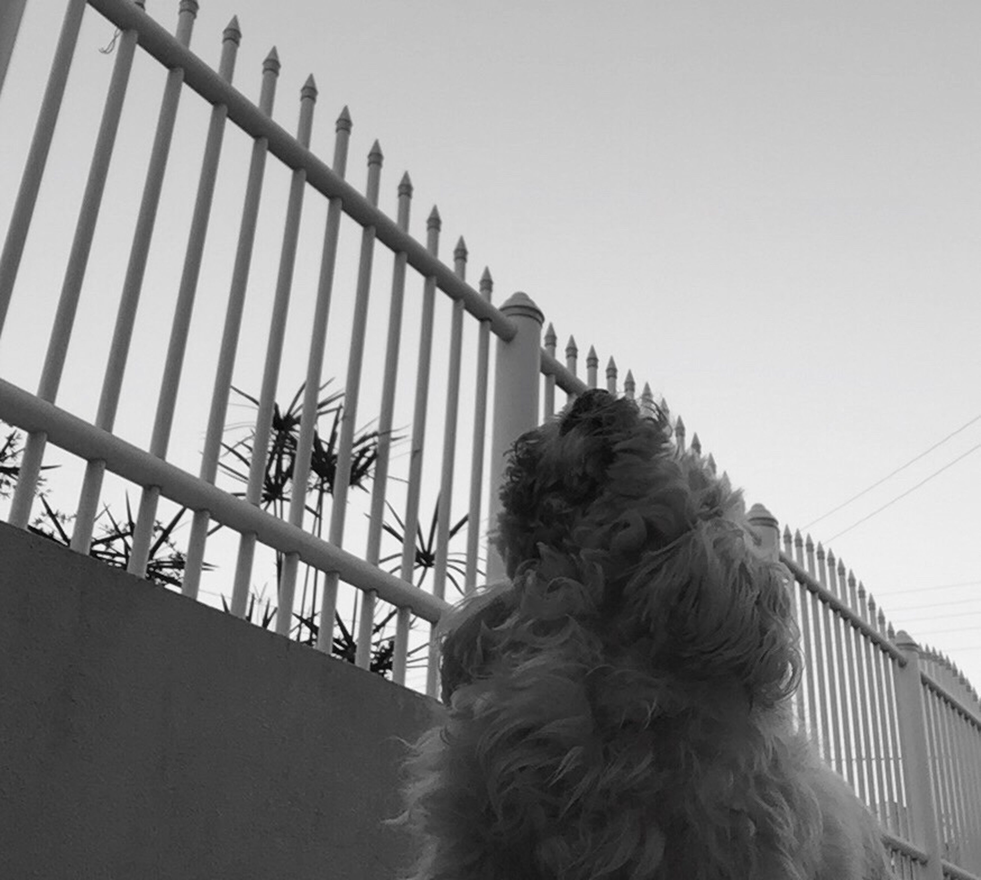 one animal, dog, animal themes, mammal, no people, domestic animals, day, pets, sky, outdoors, architecture