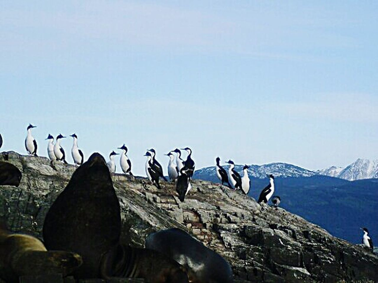 Sky Outdoors Large Group Of Animals Nature The Natural World Tranquil Scene Tranquility Canal Beagle Seal Travel Argentina Fin Del Mundo Ushuaïa Sea Nature Sea Life Sea Lion Seal - Animal Animal Wildlife Animals In The Wild Animal Themes Birds