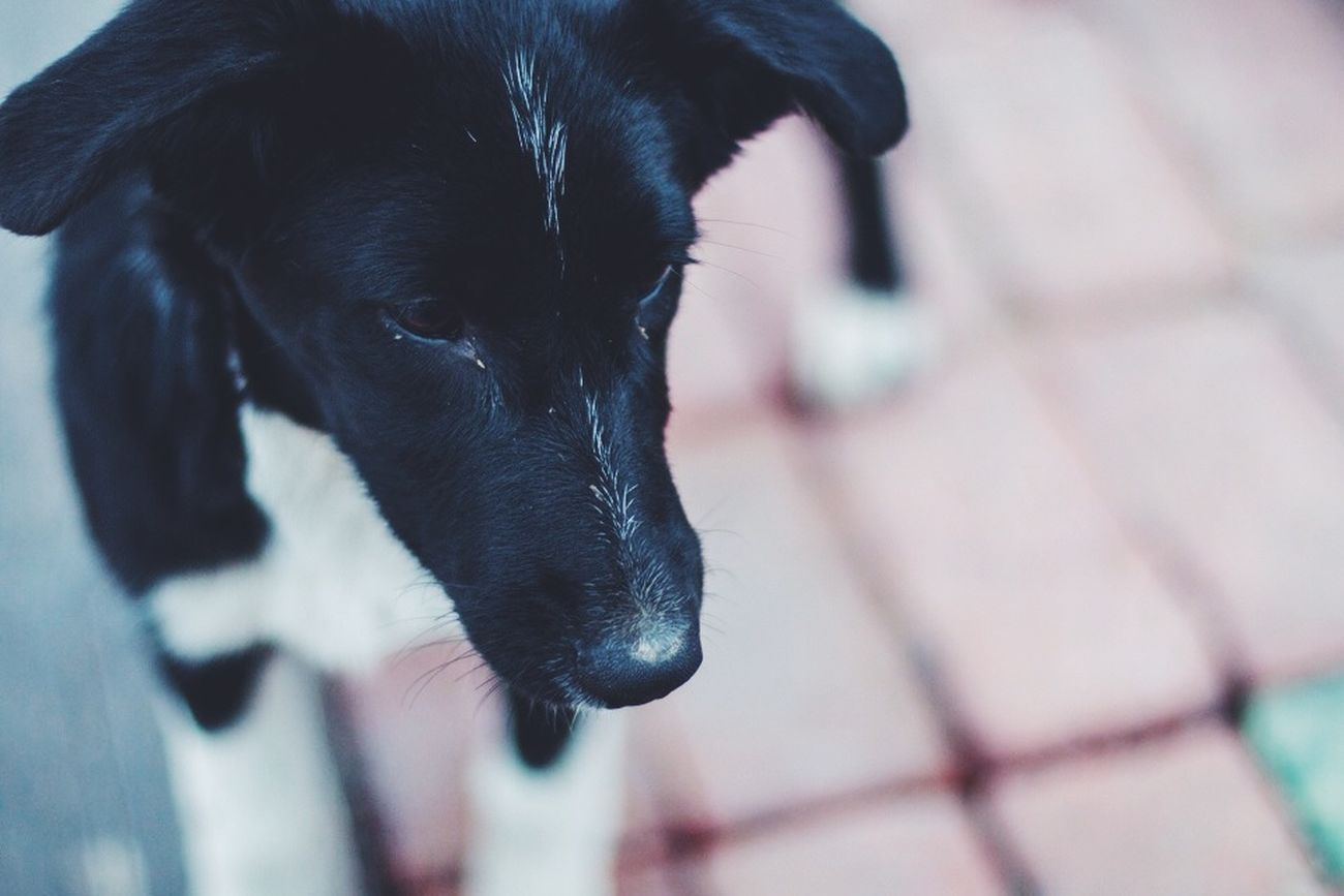 Hi! Hello World Cool Photography Photo♡ Dog Dogloversofinstagram Outumn