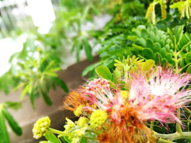 Plant Flower Nature Growth Green Color Beauty In Nature No People Day Outdoors Freshness Close-up Fragility Flower Head Herbal Medicine