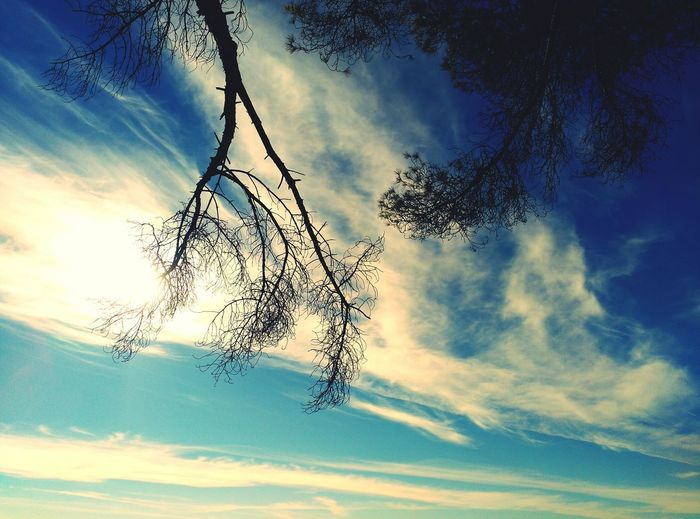 Arrels Cloud - Sky Sky Tree Nature Beauty In Nature Celblau Clear Sky Skycollection Troncos Tree And Sky Nature_collection Nature_perfection Gallecs Low Angle View Coloursoflife Paisatges Catalans Tranquility Nature Tree_collection  Focus On Shadow Cel I Terra
