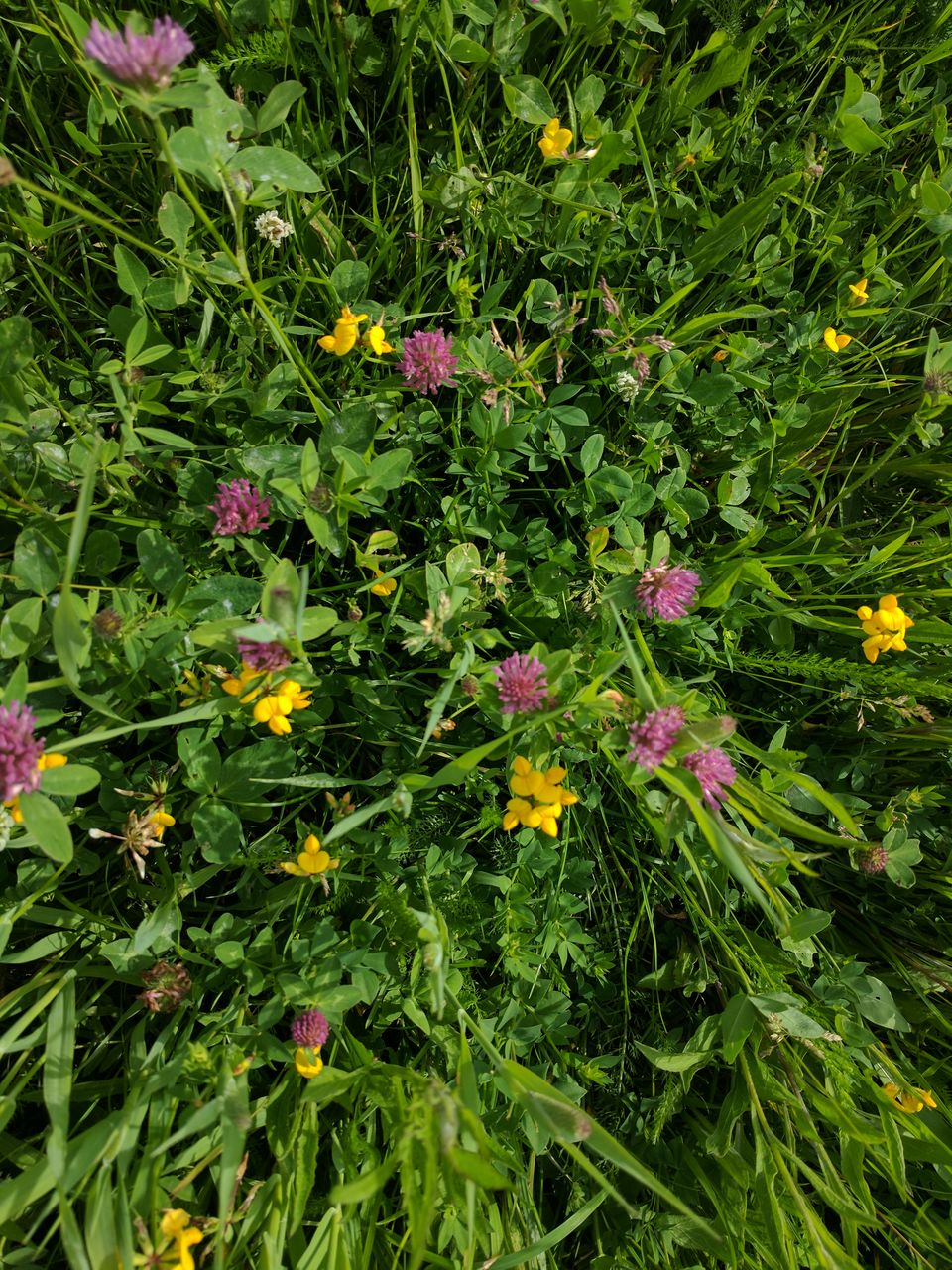 flower, growth, green color, plant, nature, outdoors, leaf, no people, yellow, blooming, beauty in nature, freshness, fragility, day