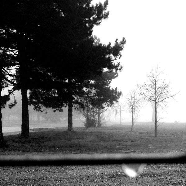 Blackandwhite Vanishing Point Landscape_bw EyeEm Nature Lover foggy November, oh how i've missed you