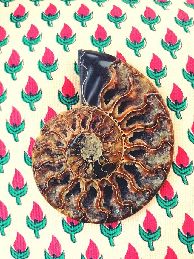 BIG Ammonite Fossil Crystalized Spiral energy Fossils Collectives