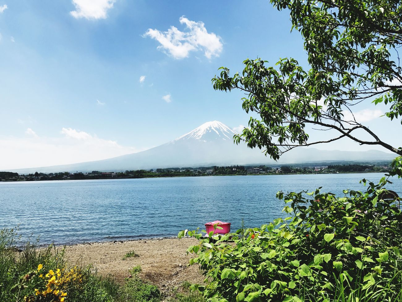 Mt.Fuji Sunny Day Fujikawaguchiko JapanLife Japan Photography Japan Nature Beauty In Nature Scenics Lake Sky Tranquil Scene Water Tree Day Mountain Range Tranquility No People Growth Outdoors Plant Cloud - Sky Landscape Foreground