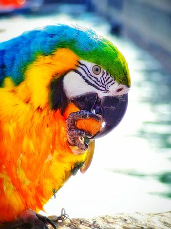Close-up Beauty In Nature 🌈⭐🌠🌍🌞 Pirate Shot Walk In The Park