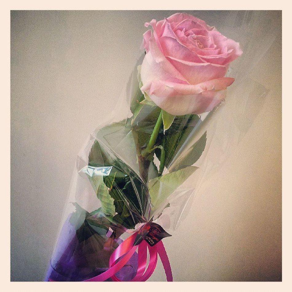 Rosé Findannee Remerciements :)