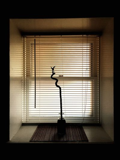 Simplicity Simple Photography Shadow Window Plant Bamboo