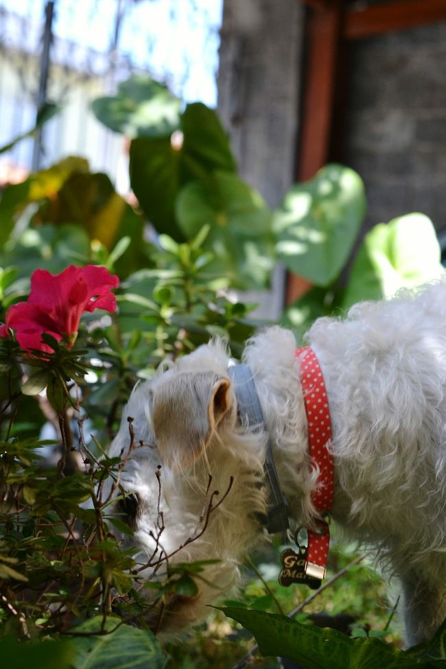 Exploring the home garden... Exploring Nature Exploring Garden Dog Love Dogs Of EyeEm Doglovers Dogslife GaiaMaria Dog Lover Lovely Dog Doglover Gaia Maria Mydog