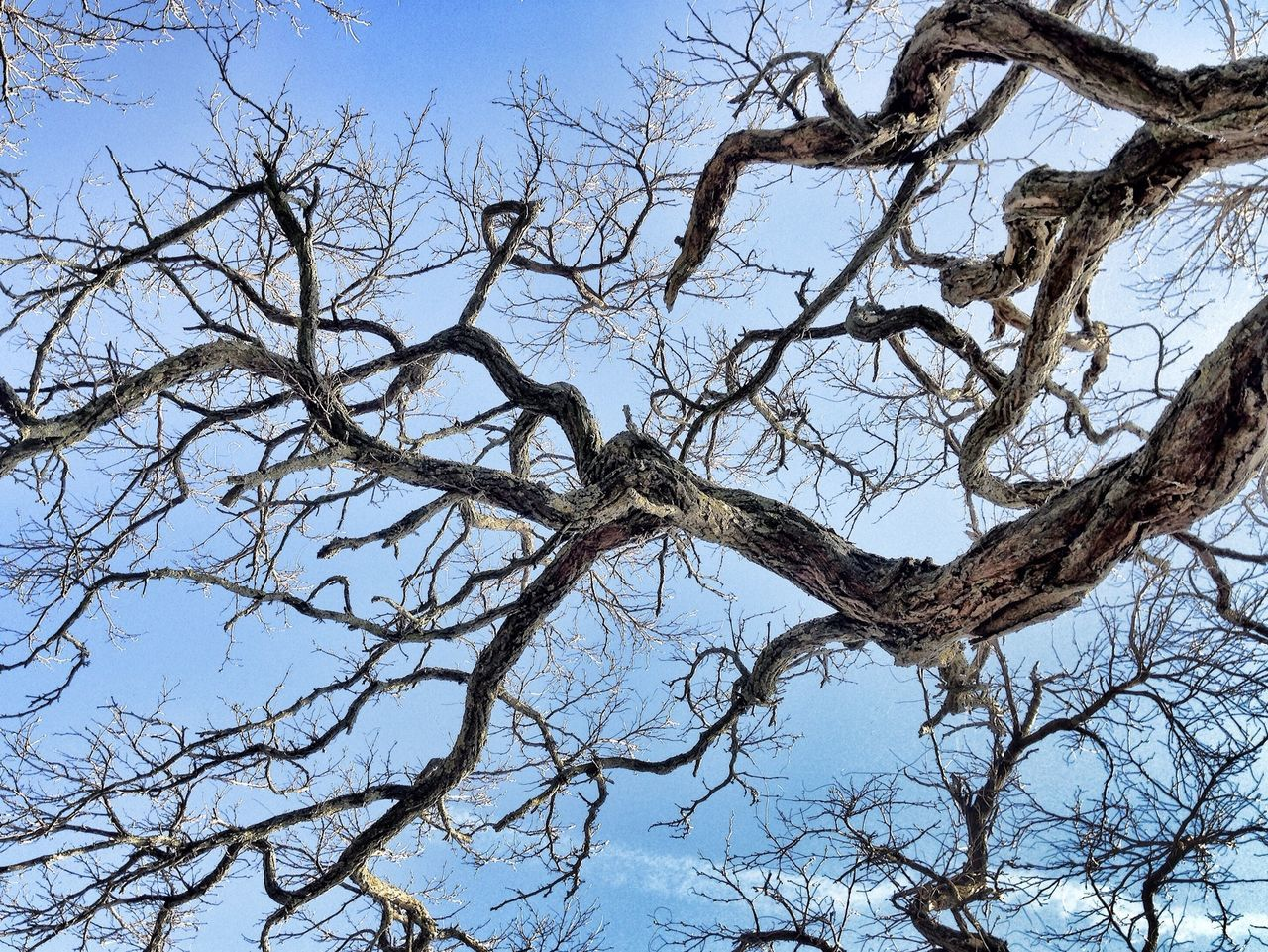 Low Angle View Of Bare Tree Branch Against Sky