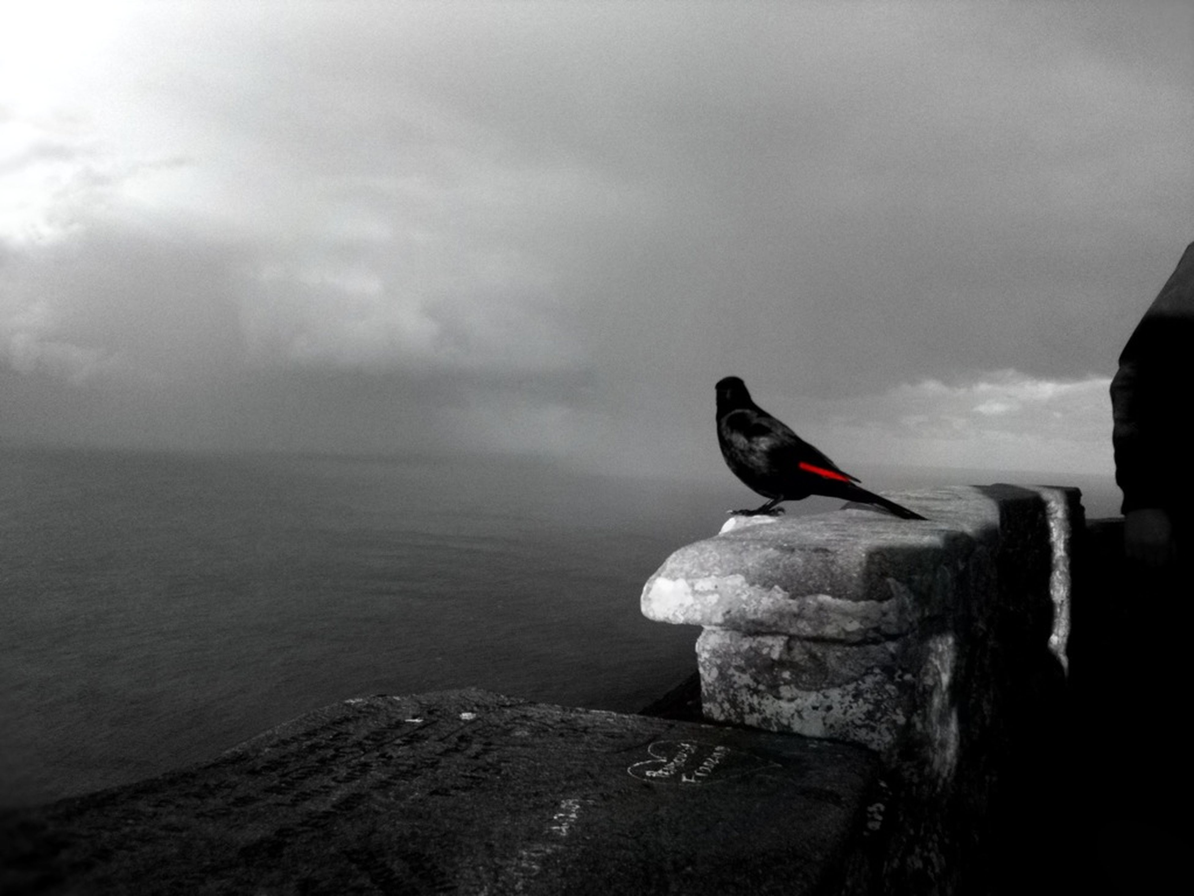 bird, one animal, sky, sea, water, animal themes, animals in the wild, nature, perching, rock - object, wildlife, beauty in nature, cloud - sky, tranquility, tranquil scene, full length, horizon over water, day, outdoors, scenics