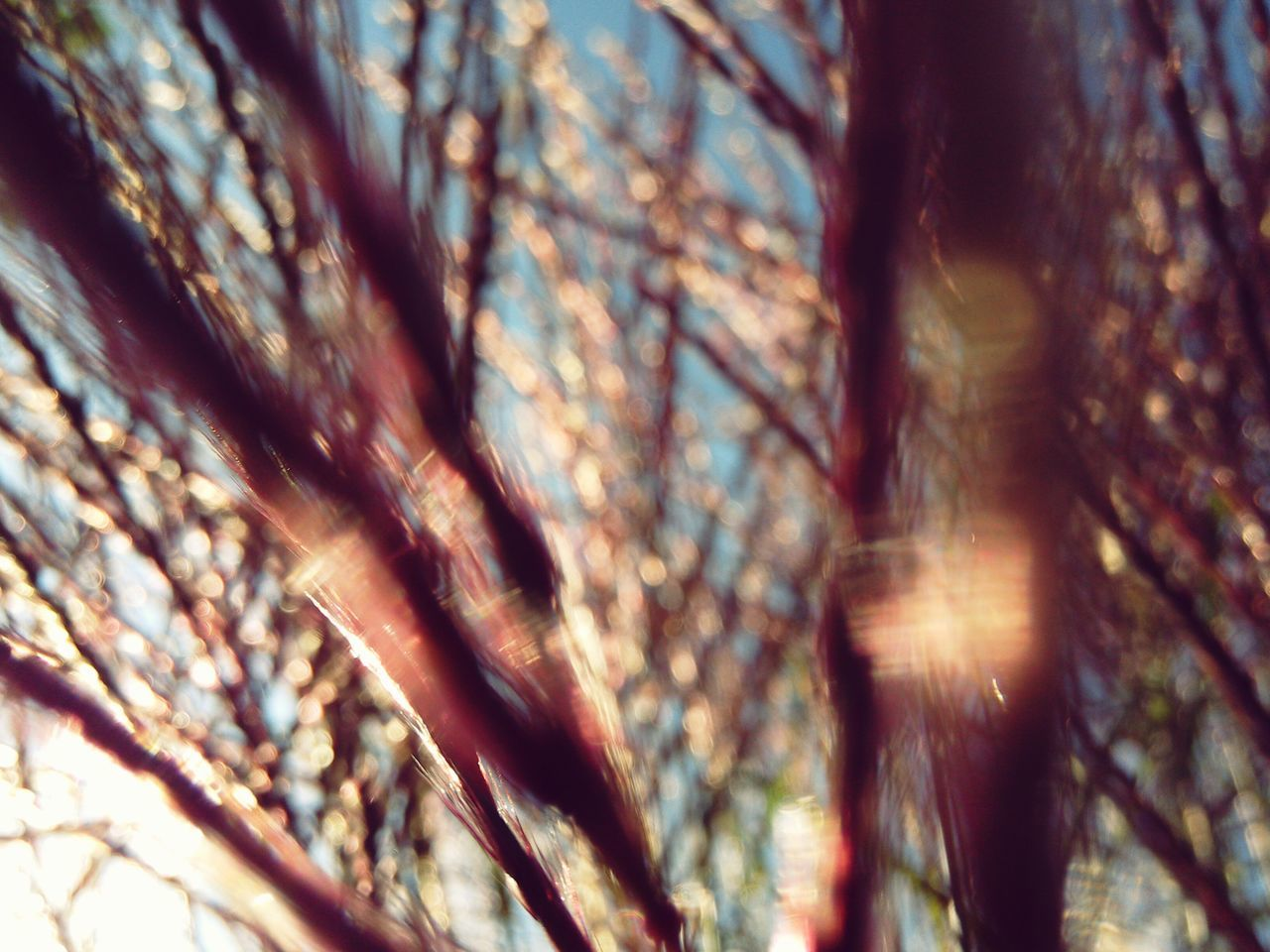 Backgrounds Grass Flowers Miscanthus Blur Pastel Colors Bokeh Nature Shades Sun Glare Abstract Pattern