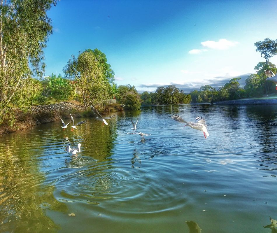 Reflection Water Sky No People Tree Nature Outdoors Beauty In Nature Day Animal Themes Bird Animals In The Wild Lake Lake Bank Reflections Tree Summertime Clear Sky Clear Water Lake View Lakeside Seagulls Flock Of Seagulls