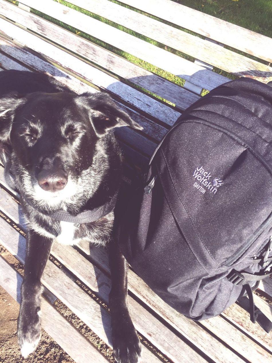 Es Passt Einfach Zusammen ☀️ Dog Pets Day Outdoors Nature Sunny Backpack One Animal Portrait BIGLOVE Music Neustrelitz Sky Animal Themes Beauty In Nature