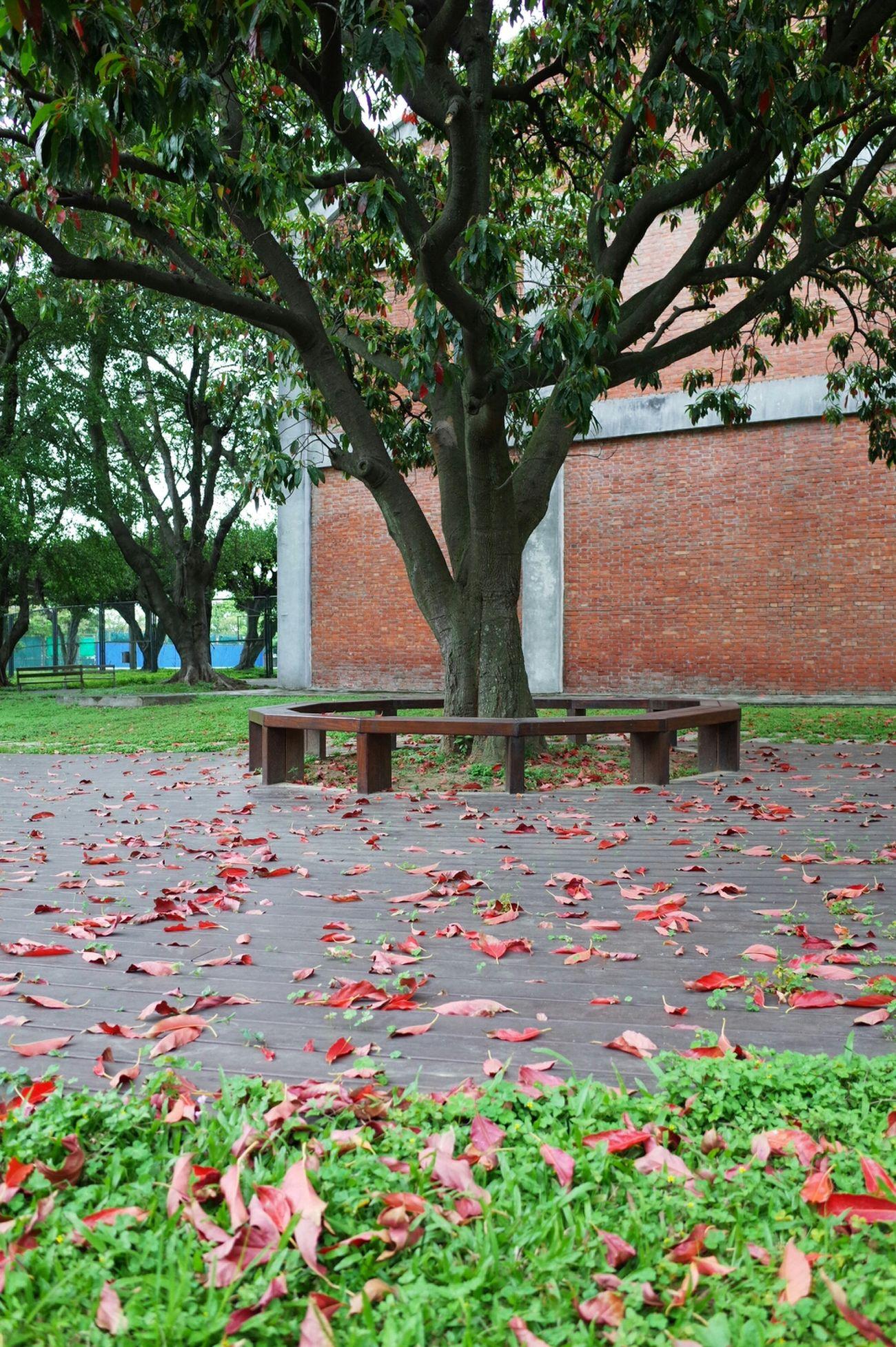 Trees Fallen Leaves