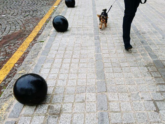 Up Close Street Photography Dog Walking