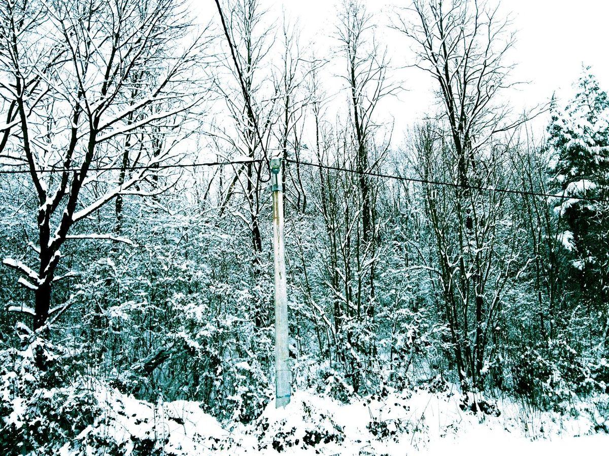 Miss Croatia Snow Snowywonderland Winter White Forest Iceblue