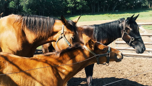 Horses Horse Photography  Horse Love Amish Country Horse Life Albion Michigan Eyeem On Instagram