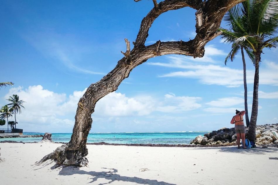 Same place again Blue Tree Sea Beach Vacations Tree Trunk Palm Tree Outdoors Sky Mammal Nature Day People Landscape Travel Destinations EyeEm Best Shots Eye4photography  Fresh 3 Open Edit Single Tree Tropical Climate Vacations No People Beauty In Nature Nature
