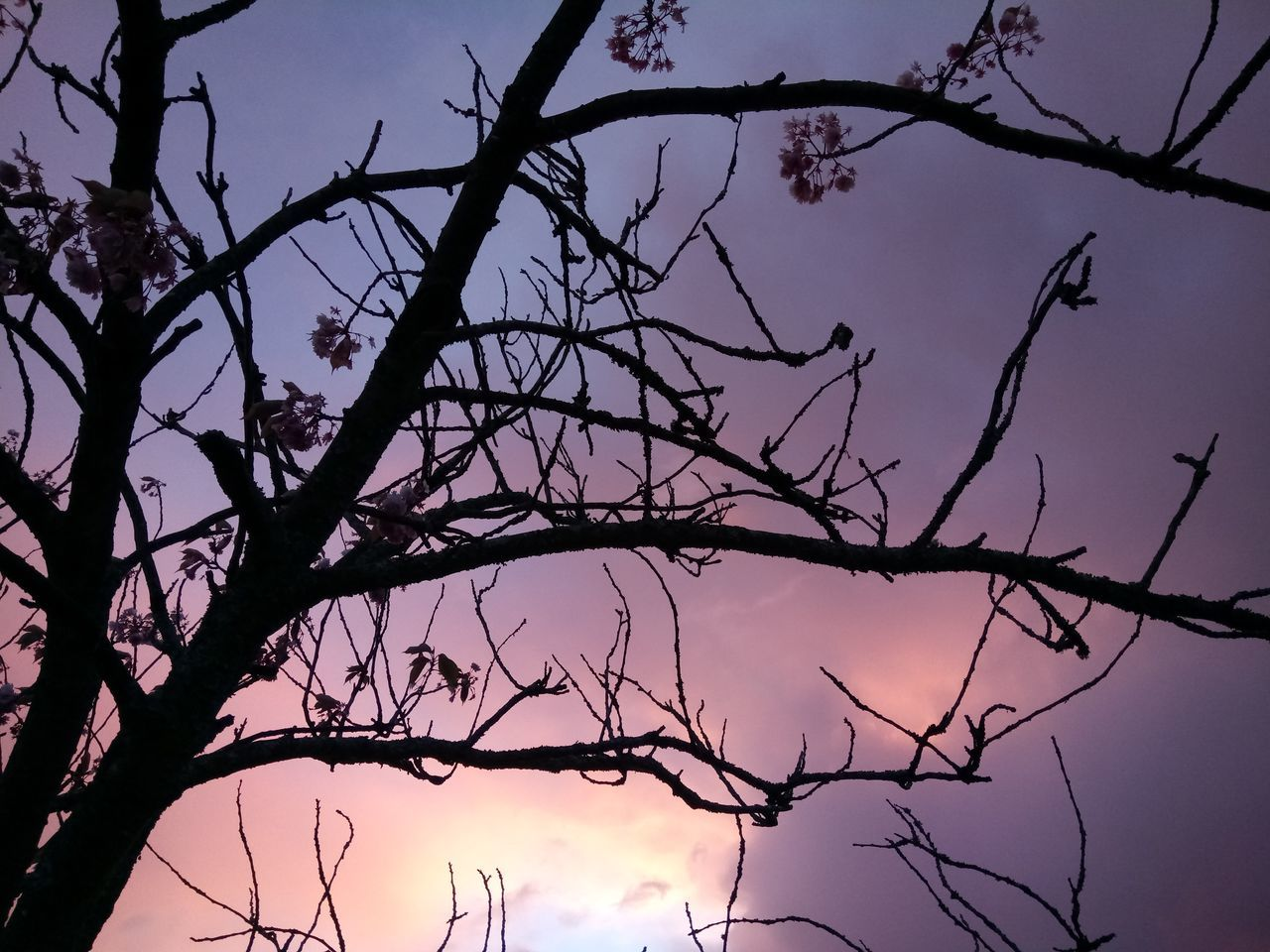 branch, tree, bare tree, beauty in nature, low angle view, nature, silhouette, no people, outdoors, tranquility, day, scenics, sky