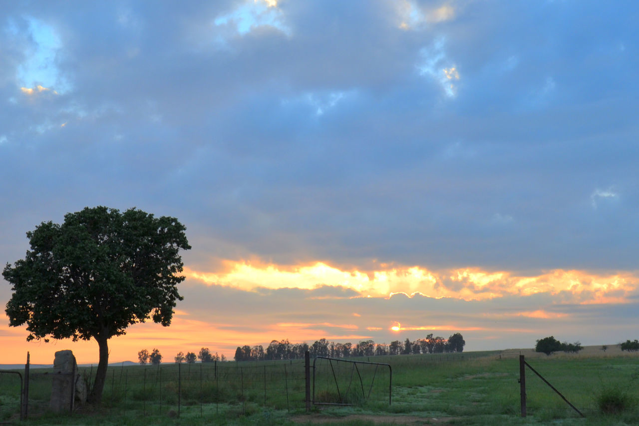Sunrise Apricot Tree Beauty In Nature Countryside Dramatic Sky Landscape Scenics Sunrise Tranquil Scene Tranquility Tree