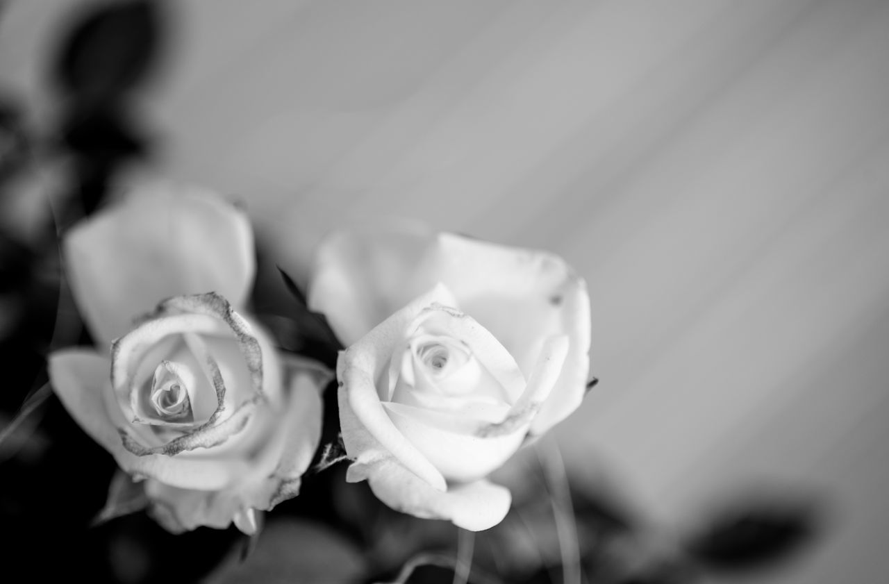 Beauty In Nature Black And White Flowers Bouquet Close-up Day Flower Flower Head Fragility Freshness Nature No People Petal Rose - Flower Roses Roses Flowers  Rose🌹 Rosé