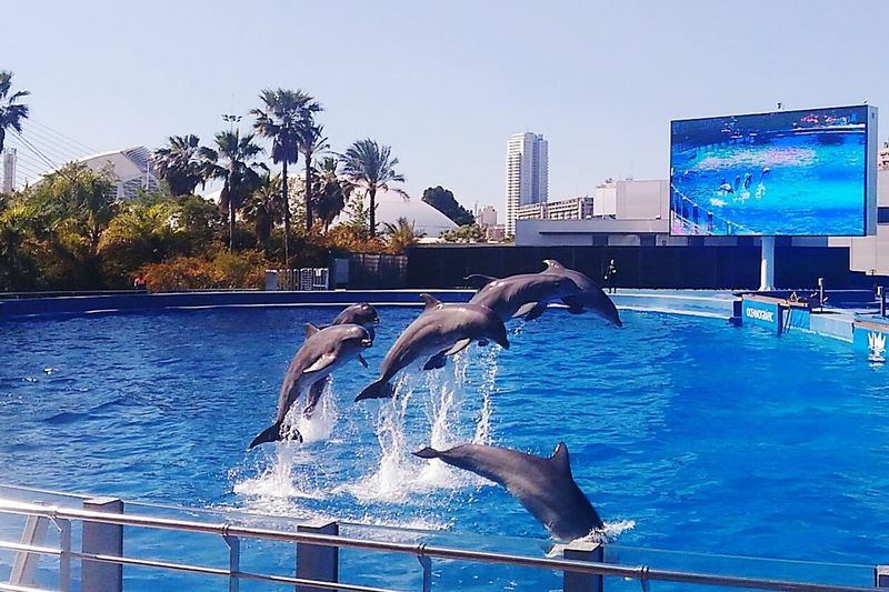 Animal Photography Dolphins Oceanographic Valencia Valencia, Spain Thanks For All The Fish DolphinShow