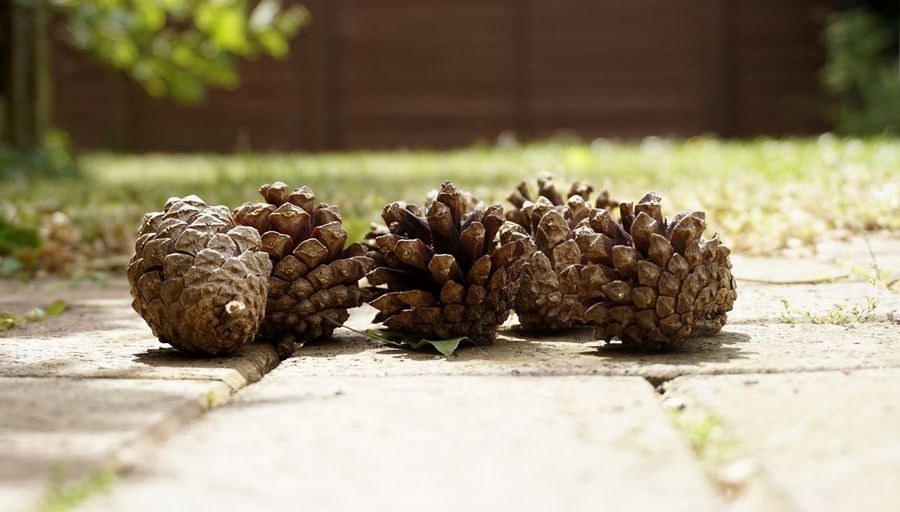 5637 Blurred Blurred Background Close-up Cones Day Floor Foreground Freshness Garden Garden Photography Grass Grass Area Green Low Angle View Low Section Nature No People Outdoors Path Pine Pine Cone Pine Cones Shade Shadow Sommergefühle