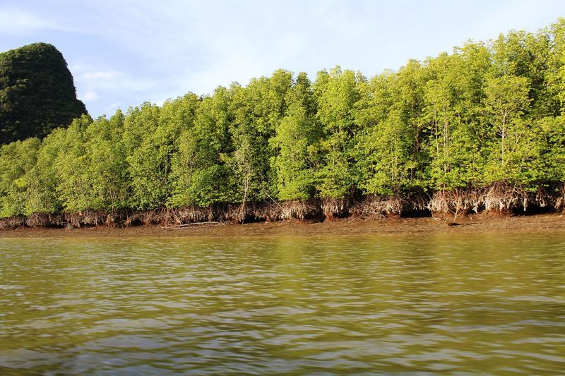 Sea Life Island Hopping Island Holiday Mangrove Forest Exotic Beauty  Life Is A Journey