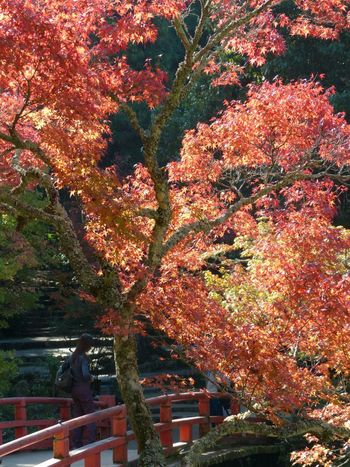 In the garden at Miyajima... Japan Japanese Garden Fall Leaves Fall Colors Miyajima The Places I've Been Today The Traveler - 2015 EyeEm Awards EyeEm Best Shots - Nature