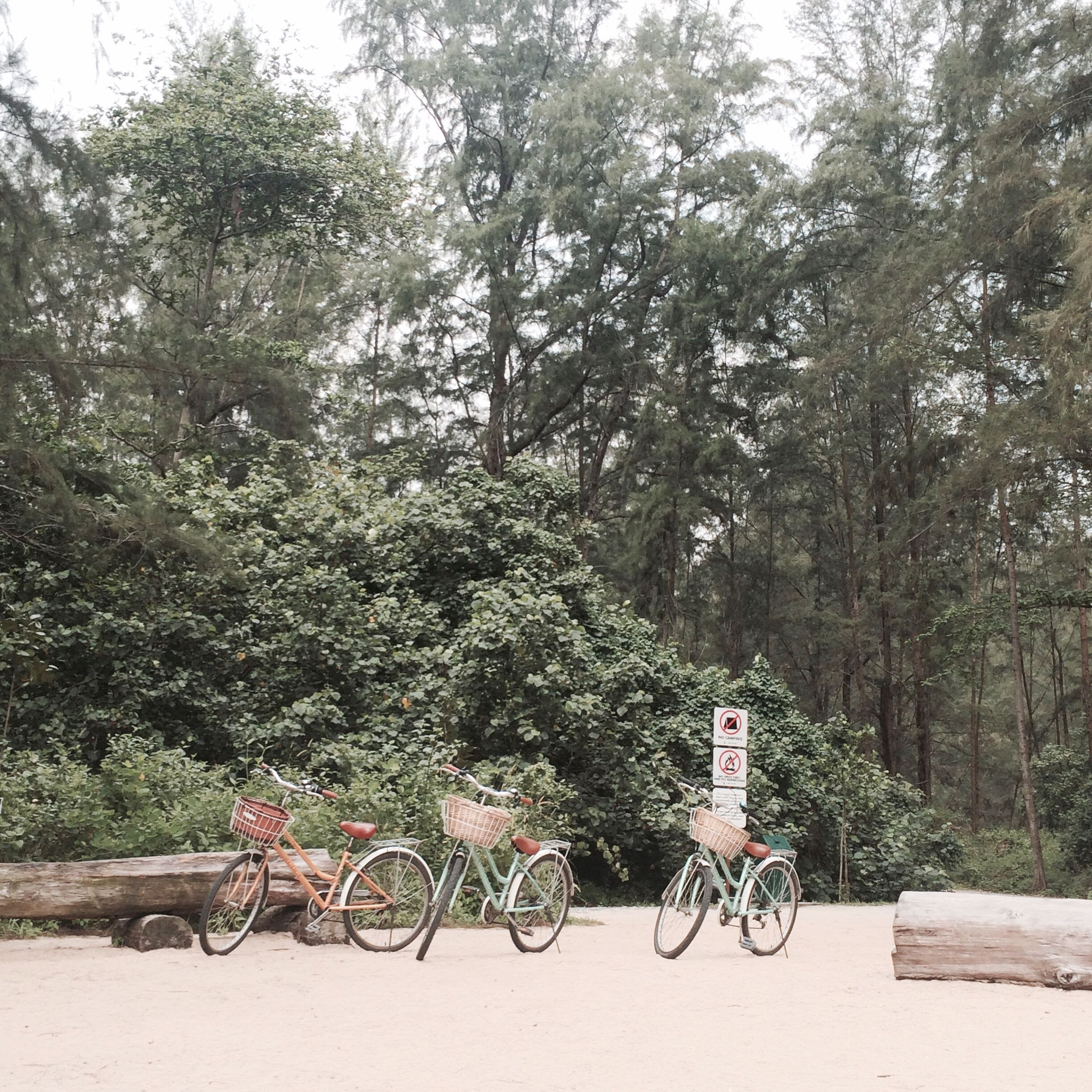 bicycle, mode of transport, transportation, land vehicle, tree, parked, stationary, parking, tranquility, cycle, nature, day, travel, growth, outdoors, no people, branch, beauty in nature, tranquil scene, absence
