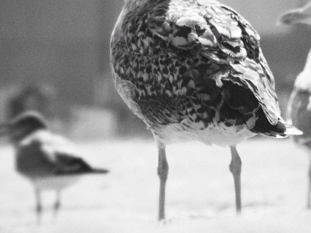Close-up of seagulls on beach