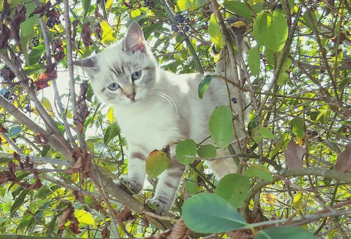 Cats Of EyeEm Catsofinstagram I Love My Cats  Cat In A Tree Hanging Out