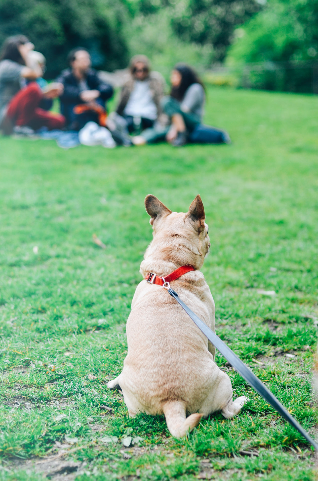 Berlin Day Dog Domestic Animals Enjoying The Sun Field Frenchbulldog Friendship Fun Fun In The Park Grass Green Color Kreuzberg Nature One Animal Outdoors Park Pets Playing With The Animals Portrait Sitting Summer Neighborhood Map
