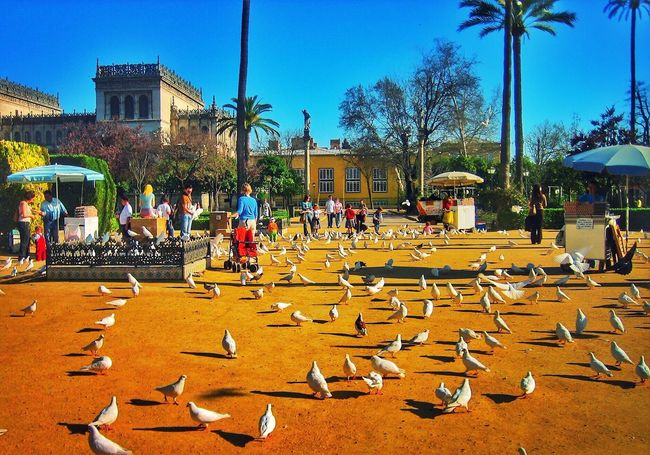 """Birds Park. """"Being able to capture a photo that tells a story on each subject and as a whole."""" 43 Golden Moments Sevilla SPAIN Streetphotography Taking Photos Urban Landscape Sunny Day Relaxing Poster It Architecture Birds Peoples Kiosk Palm Trees Plaza Green Blue Sky Clear Sky"""