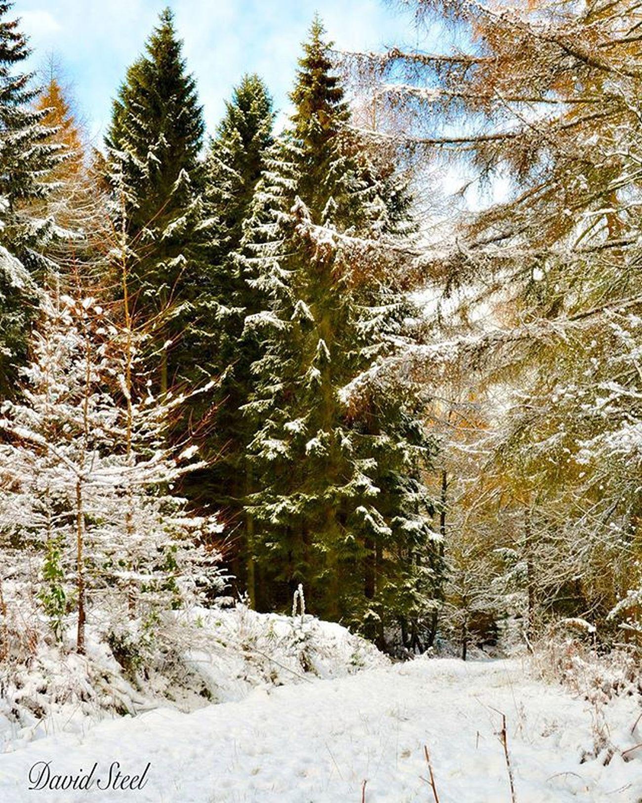 Calendar Park. First snowfall . ISO 100 f6.3 1/250. Princely_shotz Ig_captures Ig_shutterbugs Igbest_shots Insta_Scotland Loves_Scotland Ig_shots_magic Master_shots Special_shots Ig_Scotland Ig_supershots Igbest_shots Naturelover_gr Nature_sultans Nature_shooters Ig_landscapes Bnw_captures Bnwscotland Bnw_captures Nikon_photography Ig_Scotland Nikonphoto Nikond7000 snowday snow