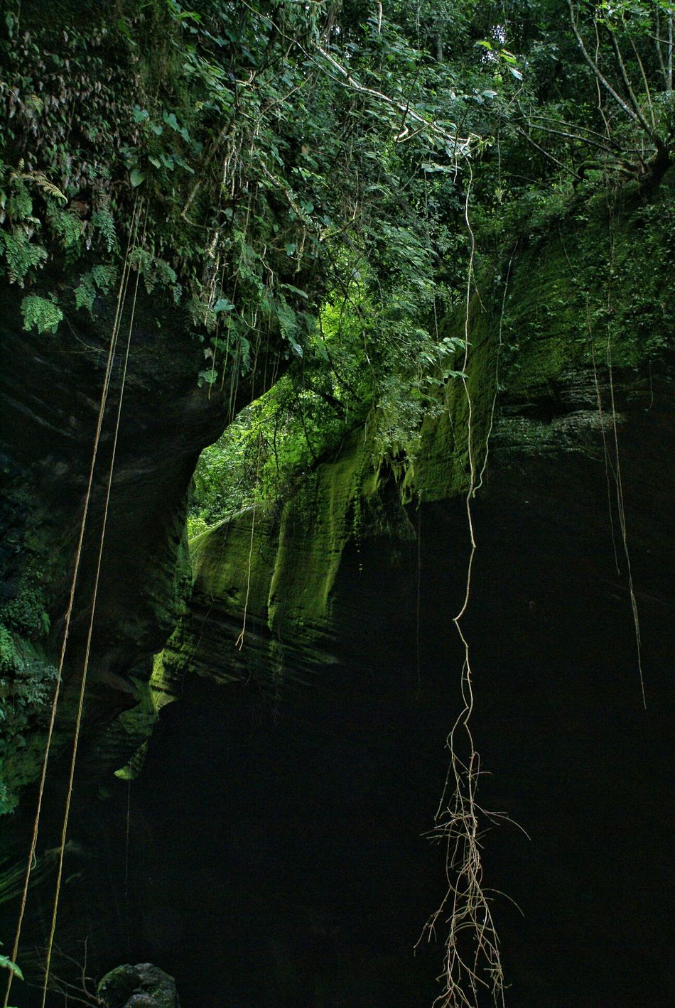 Try to Picture, on the River Bed, You walk Under The Jungle in a 50 meter high Gorge. Just Gorgeous. Awesome_nature_shots NEM Landscapes NEM Green Streamzoofamily # Landscapes of Brasil