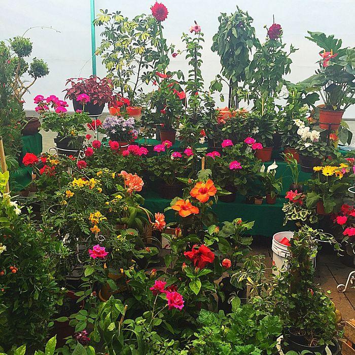 Mexico Cdmx Colours Flower Collection Colors Colorful Color Flower Head Flowerpower Flowerporn Flower Flowers