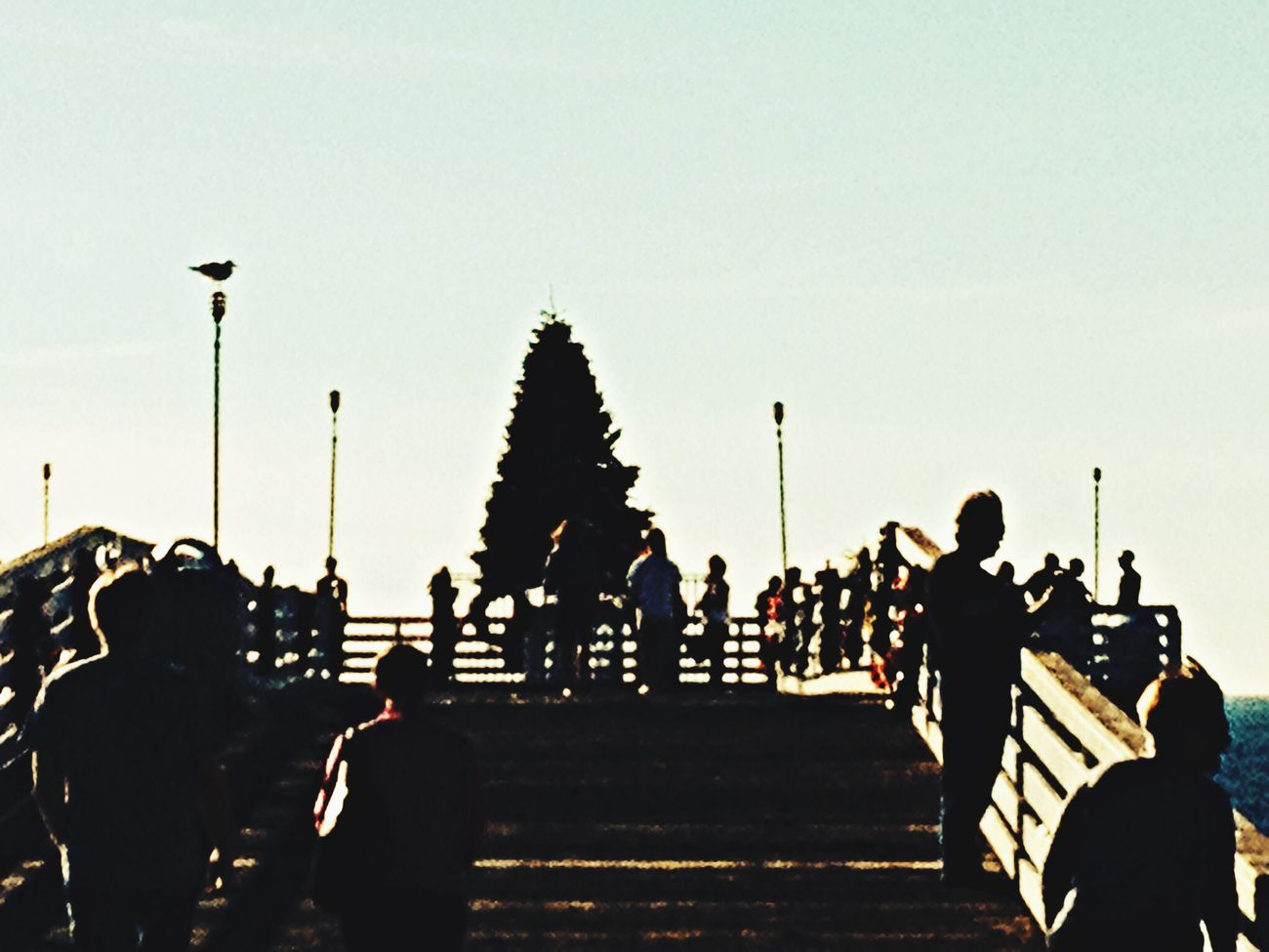 Pier Xmas Tree Boardwalk Walking Around